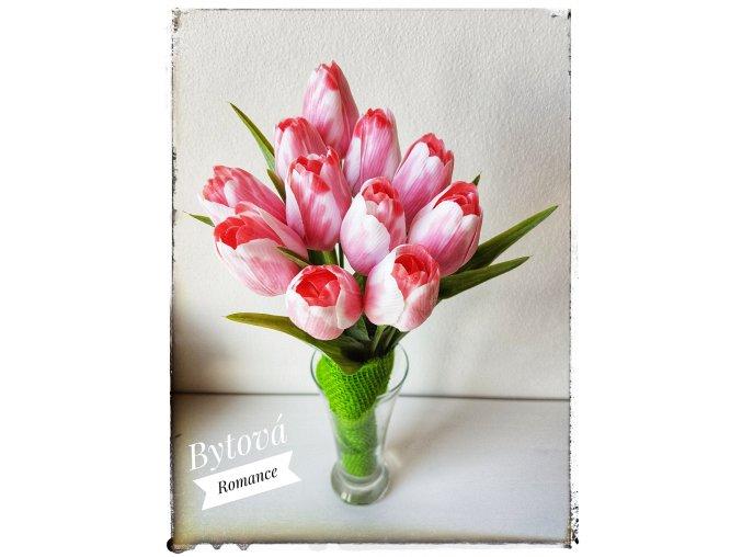 Tulipán bílo-růžový