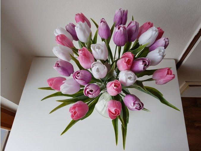 Tulipán růžovo-fialový