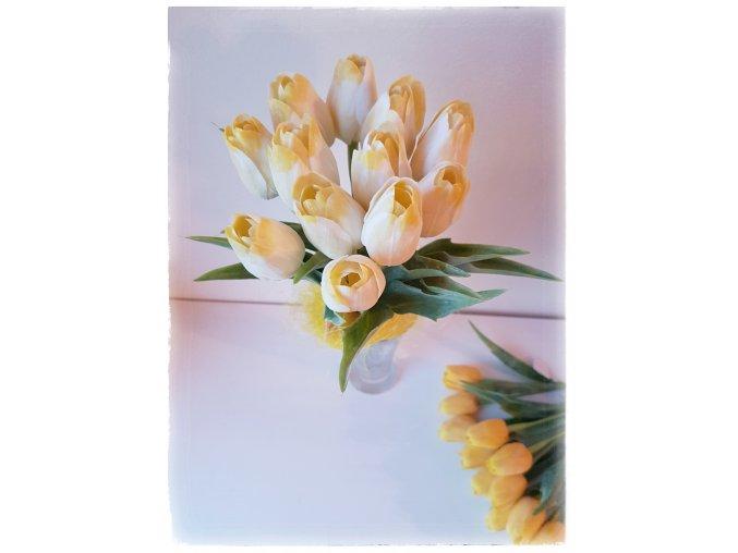 Tulipán bílo-žlutý