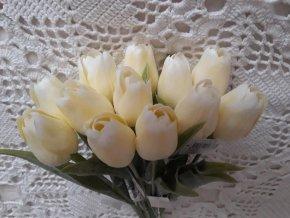 Tulipán bílo-krémový
