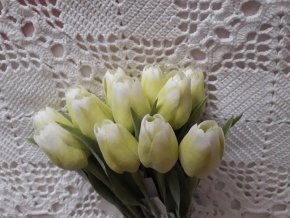 Tulipán bílo-zelený