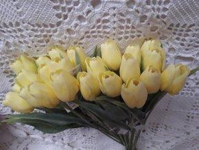 Tulipán citronově žlutý