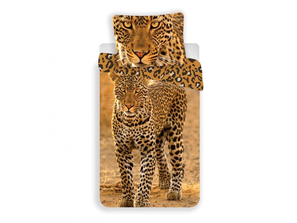 leopard 2017