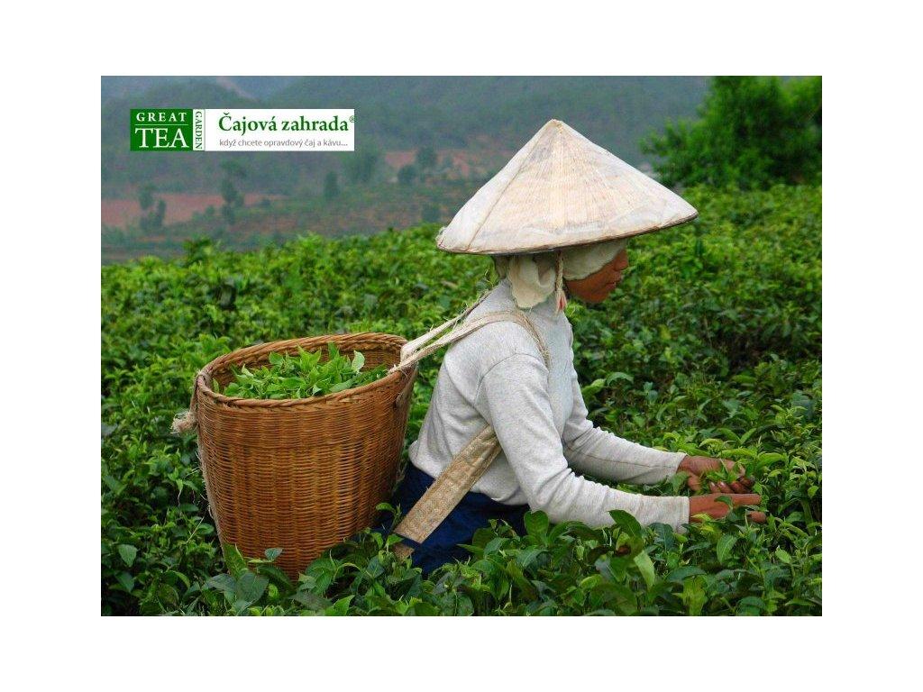Plakát Čajová plantáž v Číně