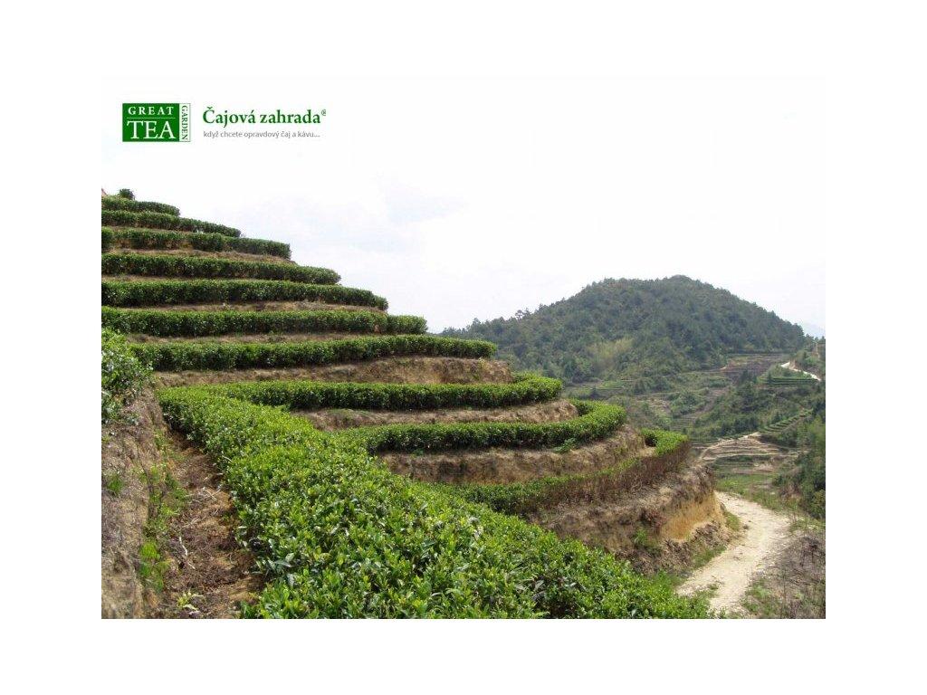 Plakát Čajová plantáž v Indonésii