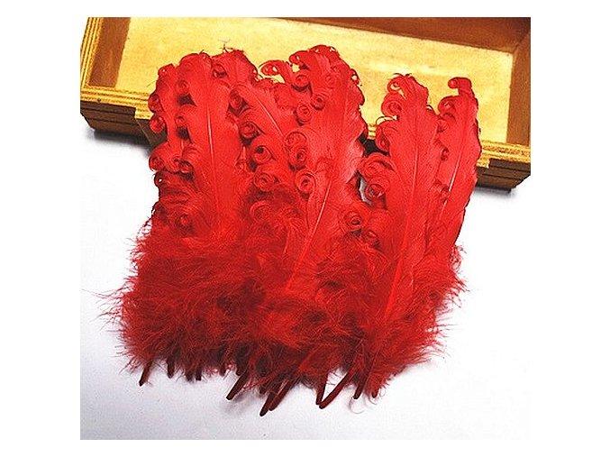 Peří Husa kudrnatá červené