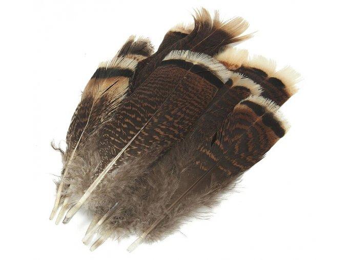 Peří Krocan ocasní