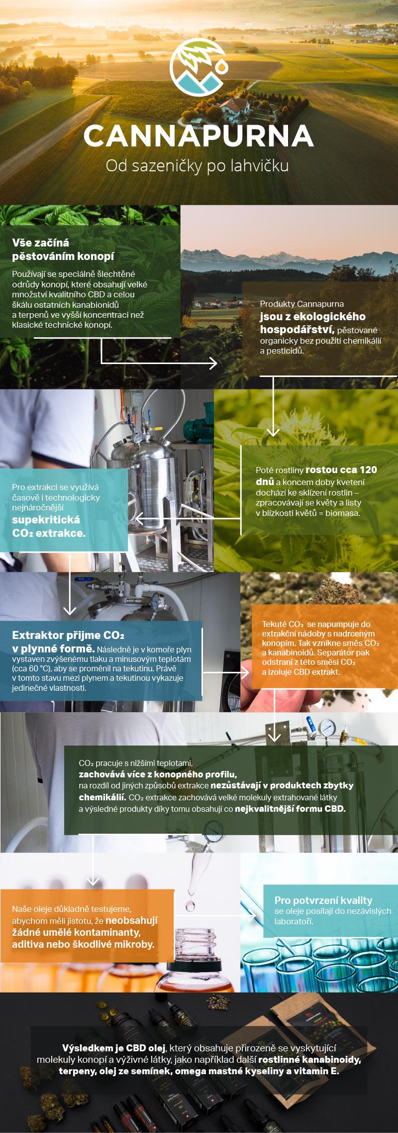 Infografika s procesem výroby CBD produktů Cannapurna