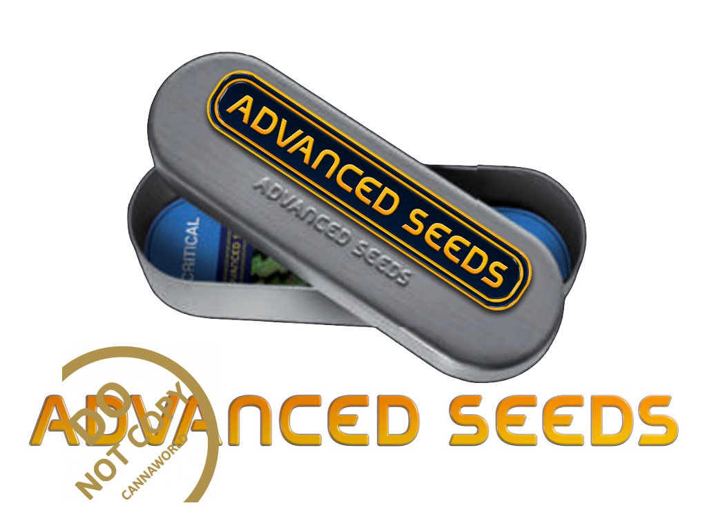 4073 collection 2 feminized advanced seeds