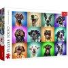 Puzzle Legrační psí portréty 1000 dílků