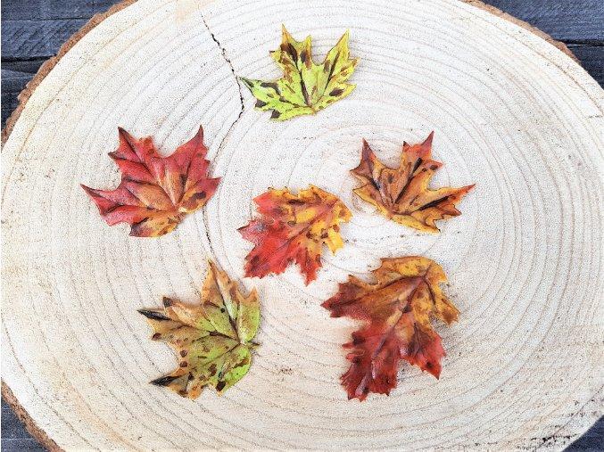 Dekorace podzimní listy