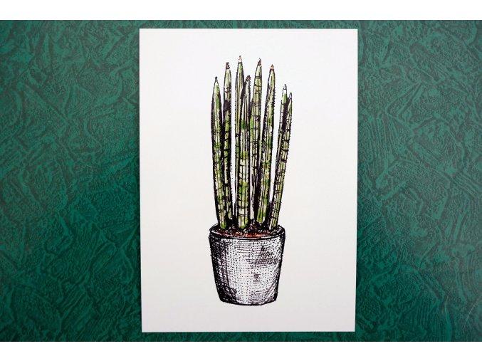 Obrázek pokojové rostliny