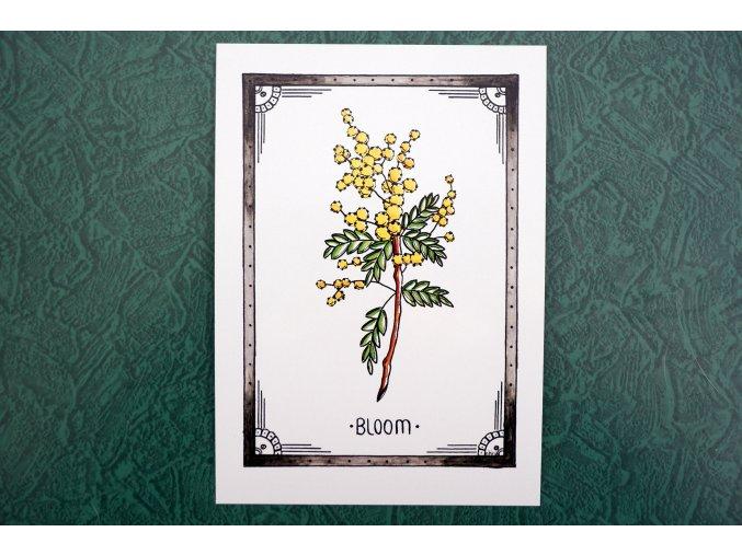 Pohlednice Bloom