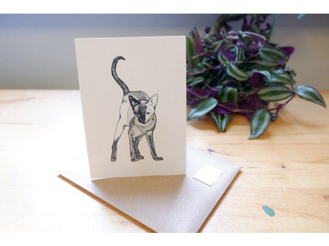 Obrázek, pohlednice - Kočka