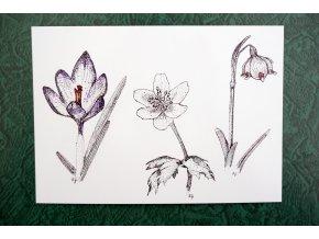 Jarní kvítí pohlednice