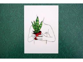 Pokojovka - speciální edice pohlednic