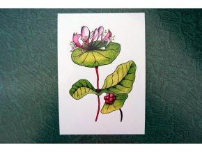 Růžový květ - pohlednice