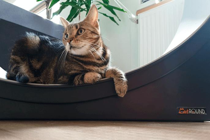 Jak mít v bytě spokojenou kočku? Zapojte do hry přirozené instinkty
