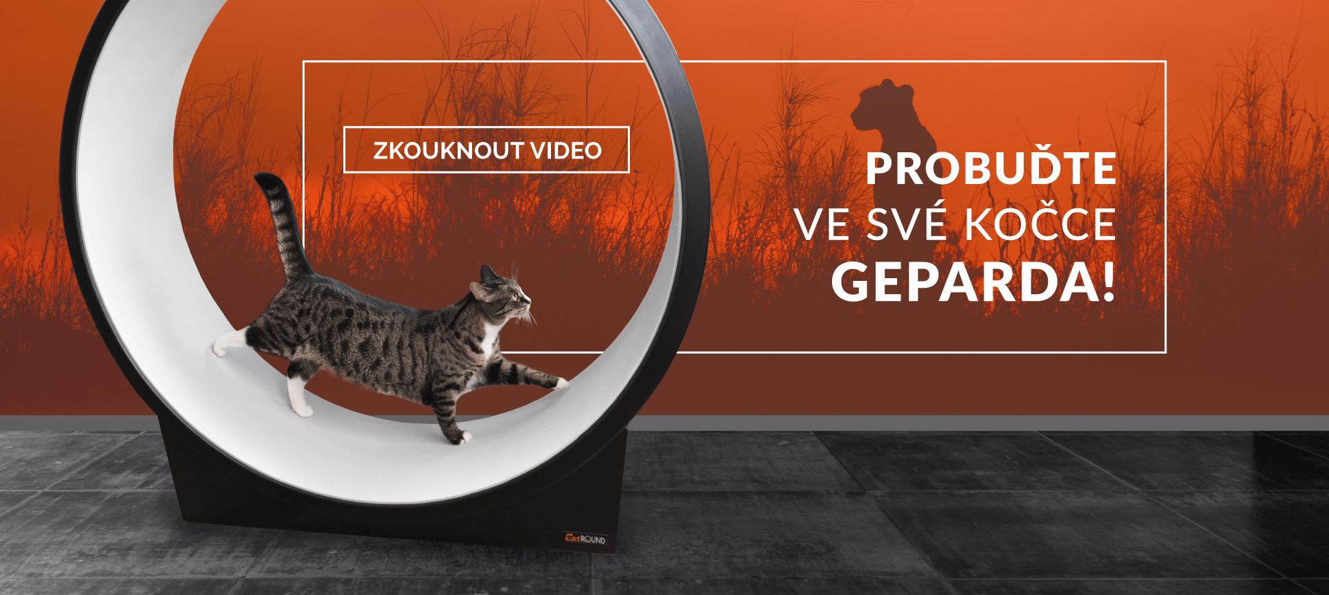 Probuďte ve své kočce geparda