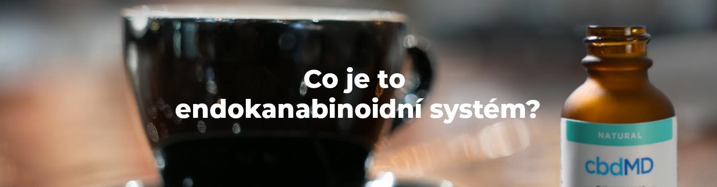 Co je to endokanabinoidní systém?