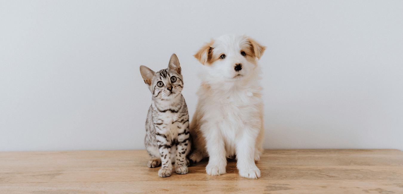 CBD pomáhá psům i dalším domácím mazlíčkům
