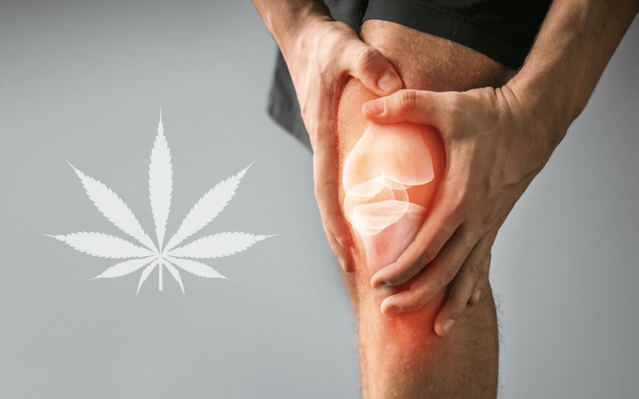 Regenerace se CBD: Jak nám kanabidiol pomáhá při léčbě zranění?
