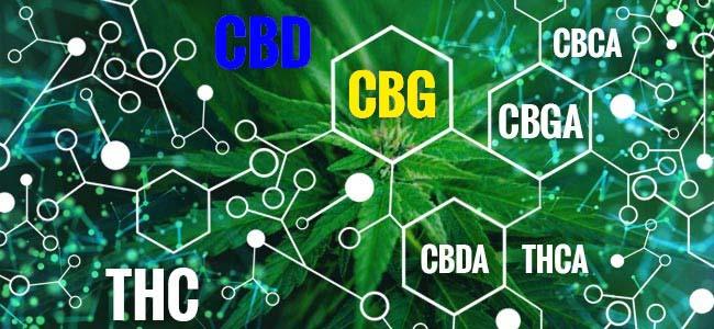 CBD vs CBG , jaké jsou mezi nimi rozdíly?