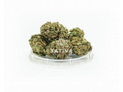 Sativa Poland - CBD konopný květ -  Sweet Amnesia
