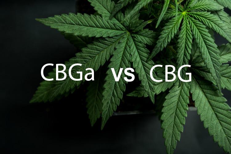 CBGa vs CBG - Co to je a čím se liší?