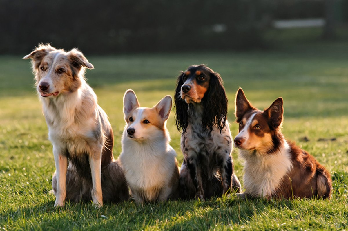 all-dogs-training_copy_1200x1200