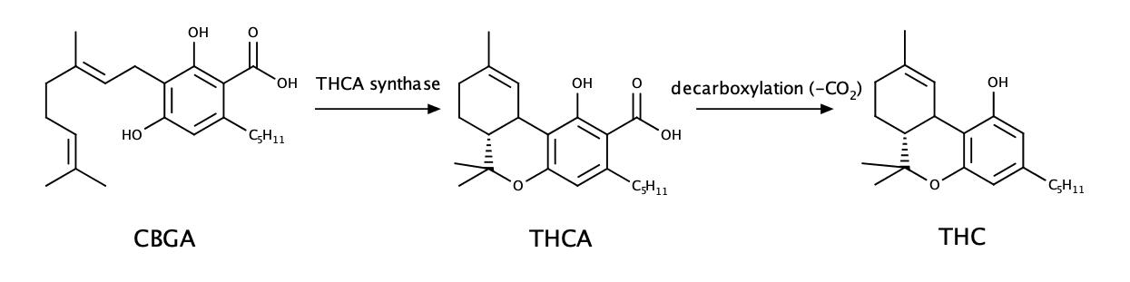 cbga-thca-thc(002)1579517924125