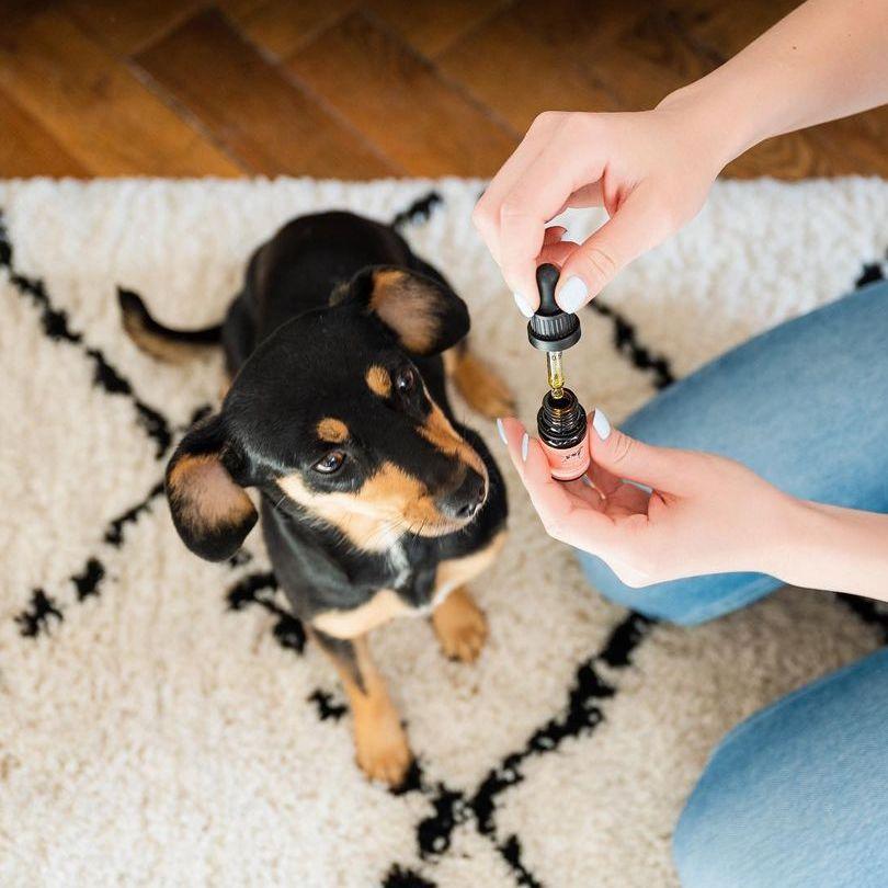 CBD pro psy: Kdy a jak ho správně dávkovat?