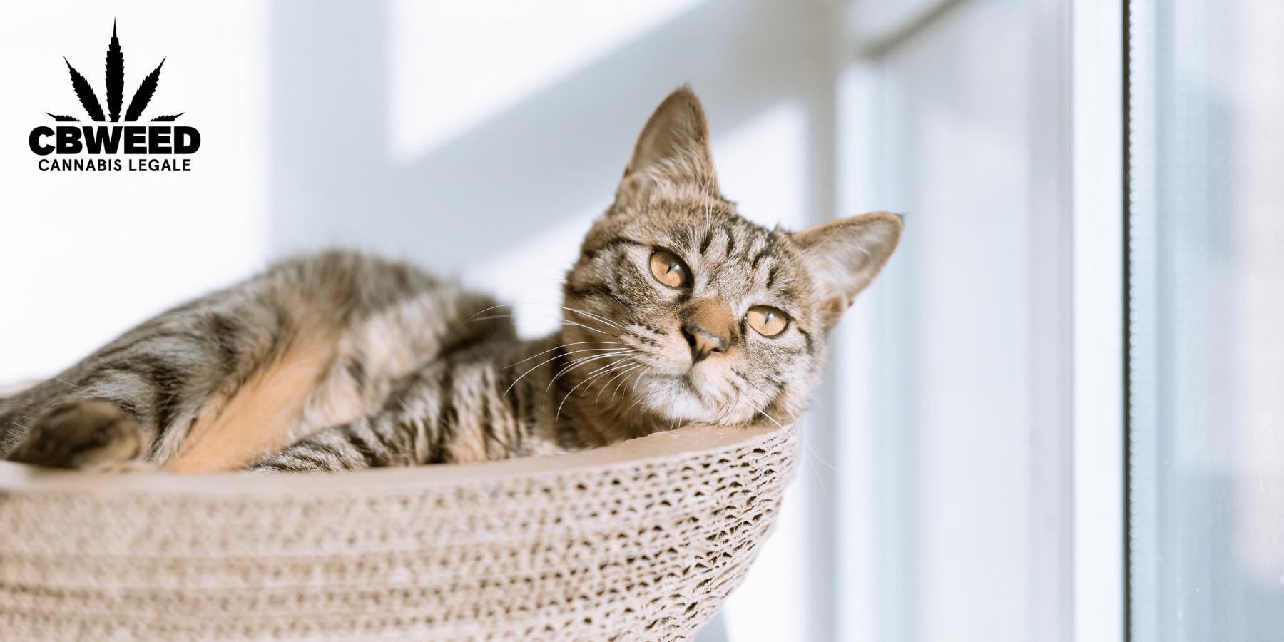Jak může CBD pomoct zvířatům? Umí zmírnit stres?
