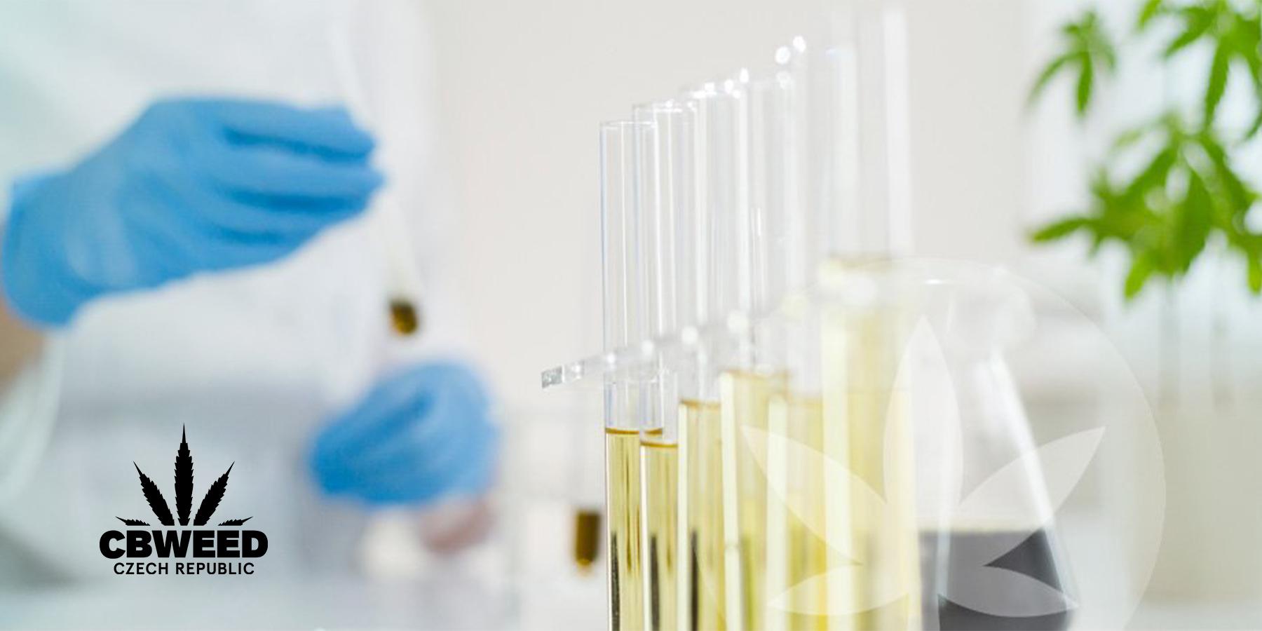 CBD oleje: mohou škodit zdraví? Jak poznat ten kvalitní?