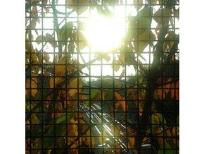 JH - Morning Sun (CD)