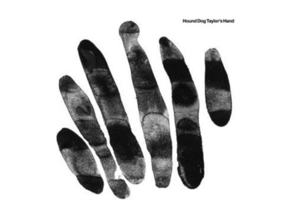 HOUND DOG TAYLORS HAND - Hound Dog Taylors Hand (LP)