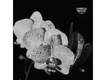 ASSORTED ORCHIDS - Assorted Orchids (LP)