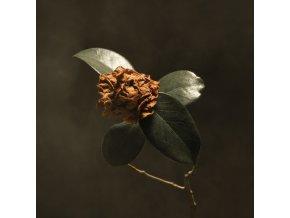 ST PAUL & THE BROKEN BONES - Young Sick Camellia (LP)