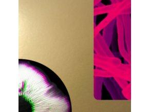 ANDREA TAEGGI - Mycorrhiza (LP)