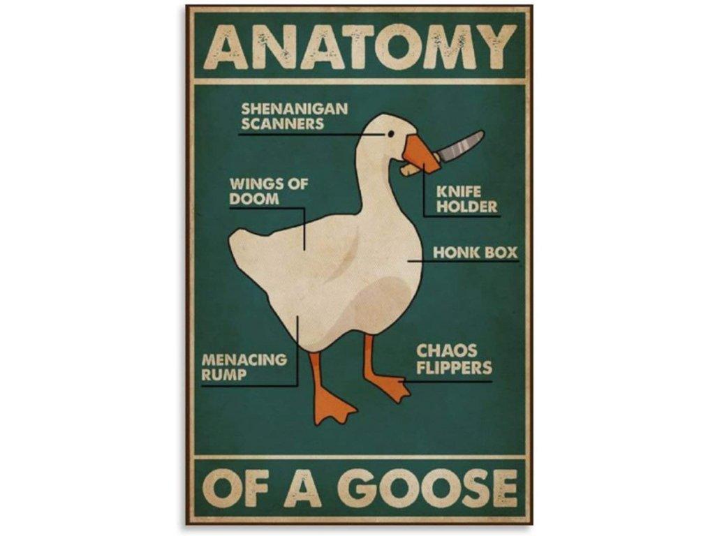 anatomie husy