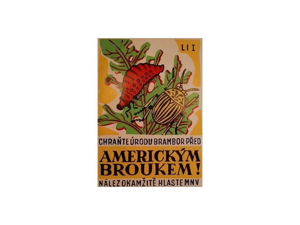 americký brouk