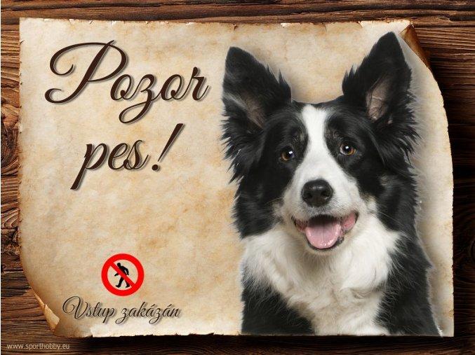 Cedulka Border kolie II - Pozor pes zákaz/CP177