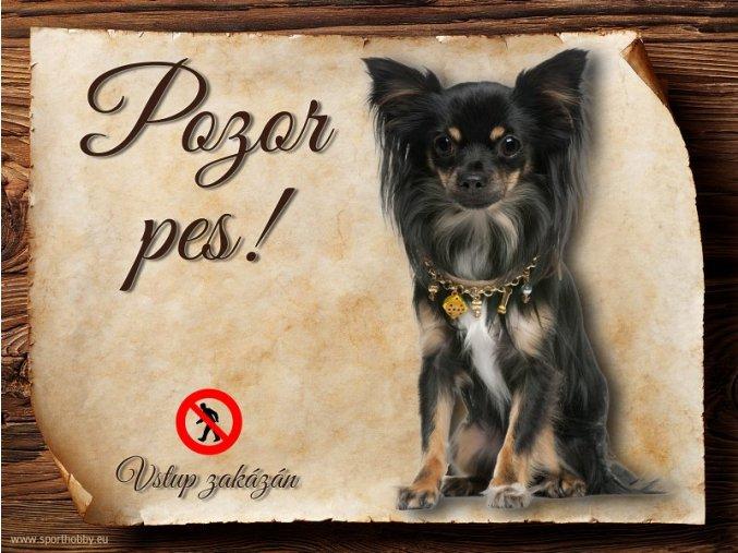 Cedulka Čivava I - Pozor pes zákaz/CP213