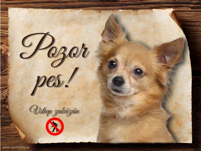 Cedulka Čivava IV - Pozor pes zákaz/CP525