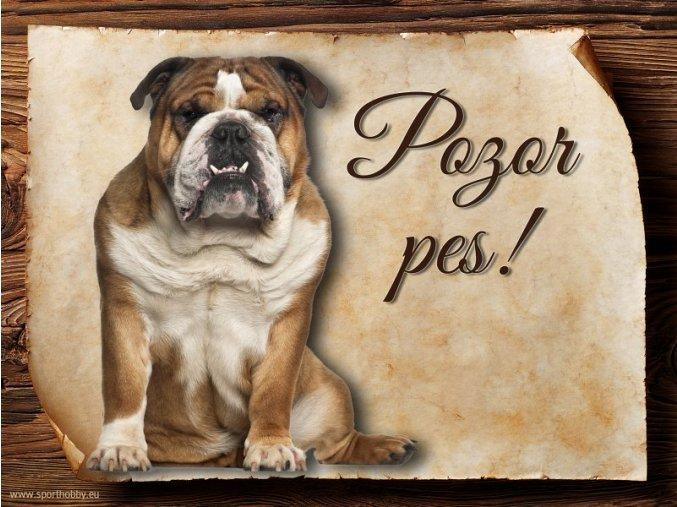 Cedulka Anglický buldog - Pozor pes/CP084