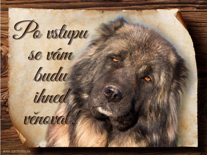 Cedulka Kavkazský pastevecký pes - Po vstupu .../CP737