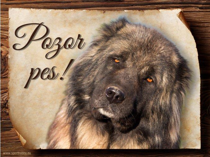 Cedulka Kavkazský pastevecký pes - Pozor pes/CP736