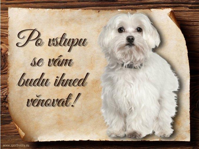 Cedulka Maltézský psík - Po vstupu .../CP224
