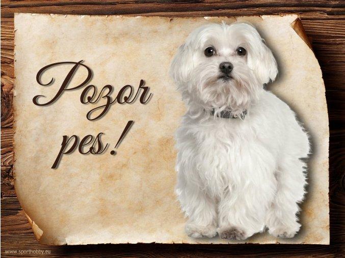 Cedulka Maltézský psík - Pozor pes/CP222
