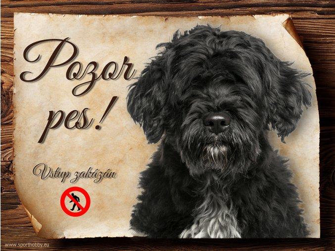 721 Cedulka Portugalský vodní pes